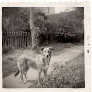 Missy, Mellen St., Cambridge, MA, July 1958