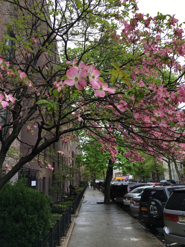 street scene, Woodside, Queens, NY